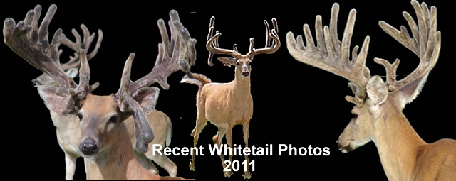 These are current photos of deer you can hunt this year (2011). Don't miss the hunt of a lifetime, call us today and reserve your spot.