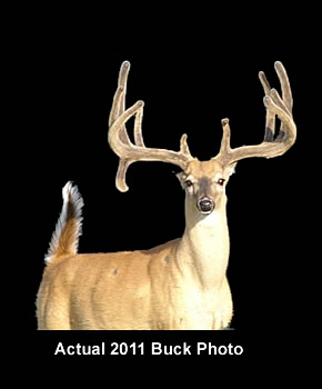 As a premier Texas whitetail deer hunting outfitter, we can offer our customers world class trophy deer hunts on a private Texas deer ranch. W.W. Outfitters, Inc. can provide you with an opportunity to harvest a 160 to 200 plus class Boone and Crockett whitetail.